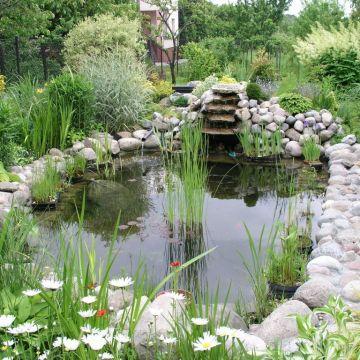 Устройство и строительство пруда водоема