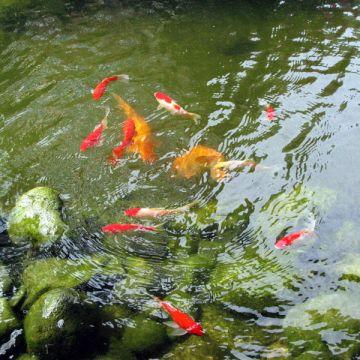 Пруд водоем для разведения рыды