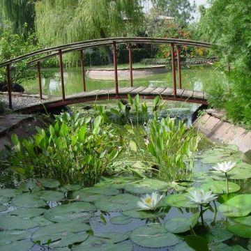 Декорация дачного пруда